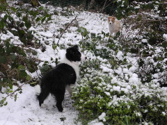 Pups in snow